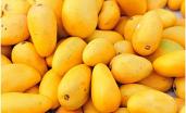 Pakistani Mangoes Sindhri