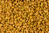 Fenugreek Seeds 14 oz
